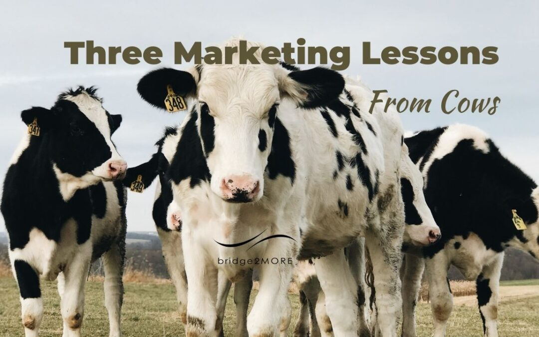 three-marketing-lessons-from-cows